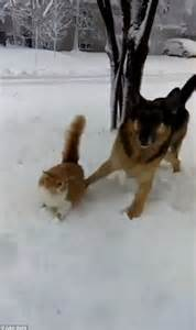 Playful dog called Katniss dunks a cat's head in the snow